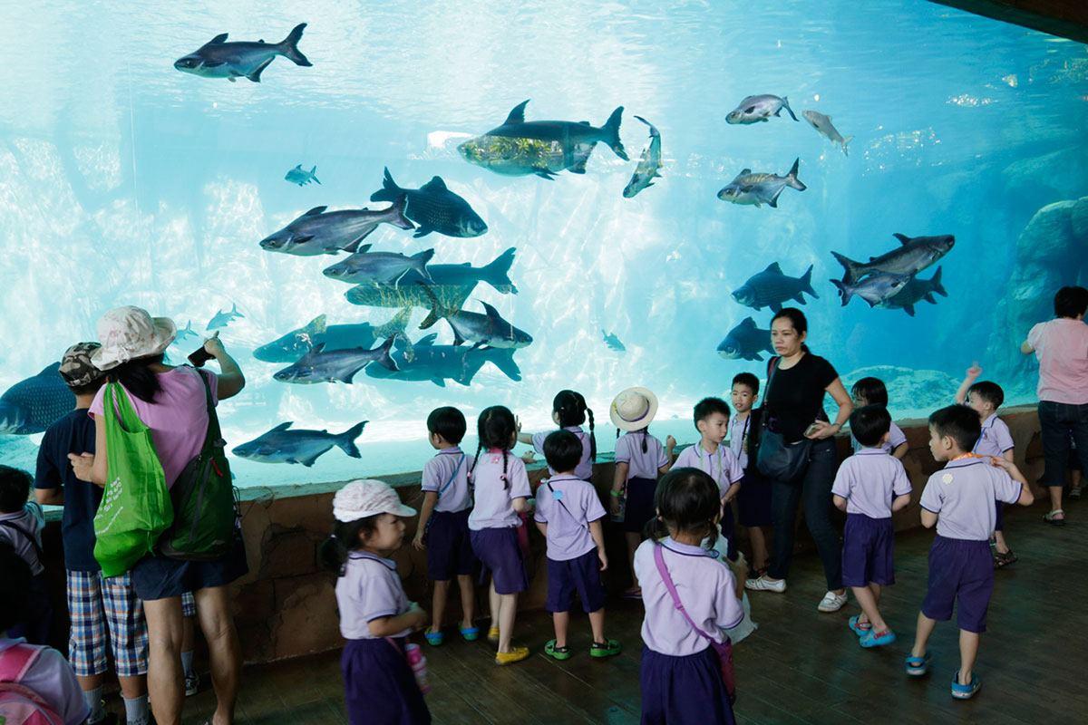 Largest Freshwater Aquarium Singapore Breaks Guinness