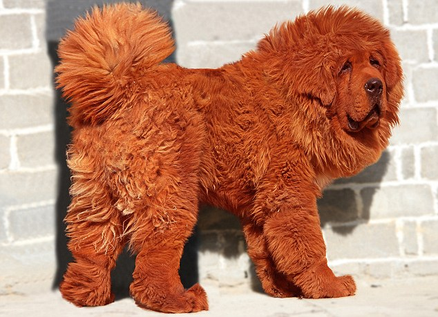 Most expensive dog: Re...