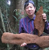 worlds largest fungus China