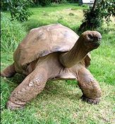 Jonathan the tortoise oldest living animal