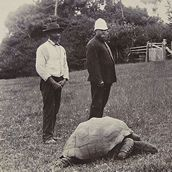 Jonathan the tortoise the world's oldest living animal