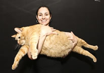 worlds fattest living cat sponge bob