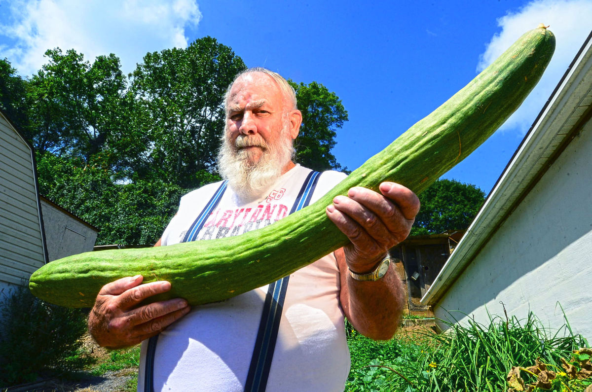 Longest cucumber butch taulton breaks guinness world for World s longest video