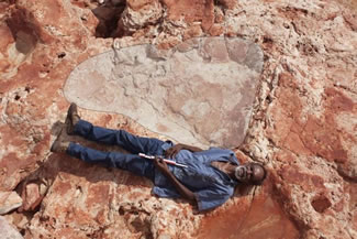 The biggest dinosaur footprint ever found, measures at about 5 feet 9 inches. A Team of paleontologists from the University of Queensland and James Cook University discovered 21 different types of fossils in area dubbed, 'Australia's Jurassic Park'