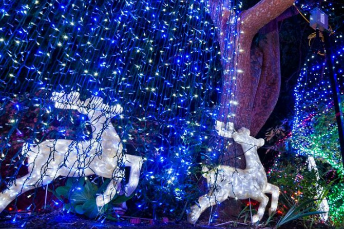 Lights Artificial Christmas Tree Canberra Breaks Enlarge Photo Trees