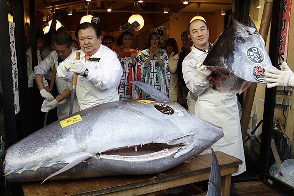Most expensive tuna fish 736000 tuna fish sets world for Expensive fish to eat