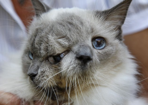 Delicieux ... Photo) The Guinness World Record For The Longest Surviving Janus Cat ...