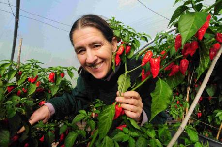 Most Chillies Grown From One Plant Joy Michaud Breaks
