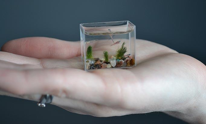 Smallest Aquarium Stanislav Konenko And Anatoly Konenko Sets World